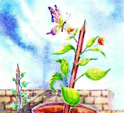 小树苗成长过程简笔画-小豆芽成长记
