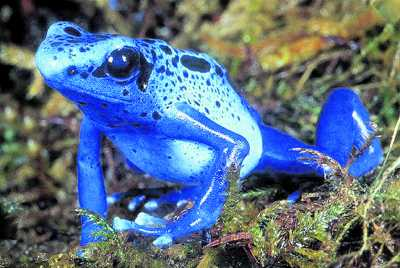 浙江首次截获四只活体箭毒蛙,是全球毒性最强的物种之一.