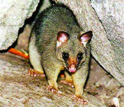 一些保护新西兰野生动物的环保人士成立了